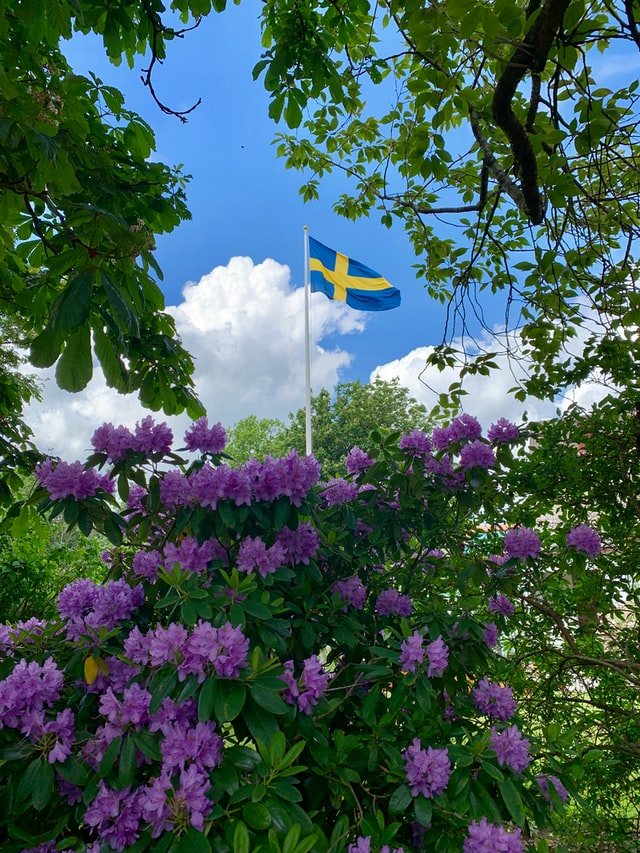 En svensk flagga omgiven av blommiga träd och buskar.